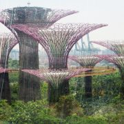 TreetopsForest